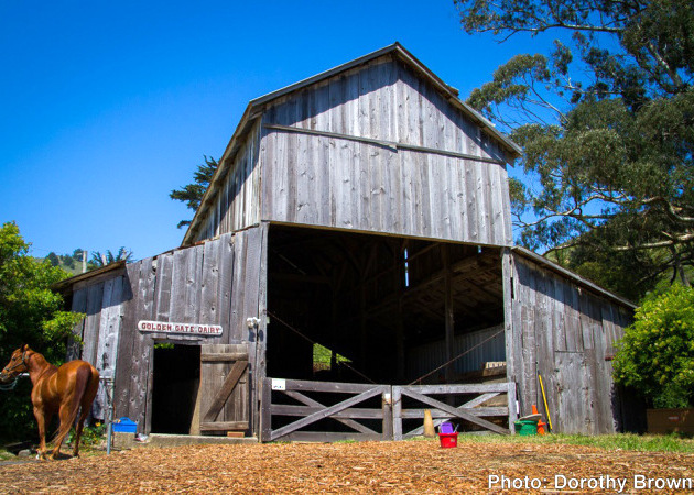 GGD Barn with Horse - 5x7 630x450