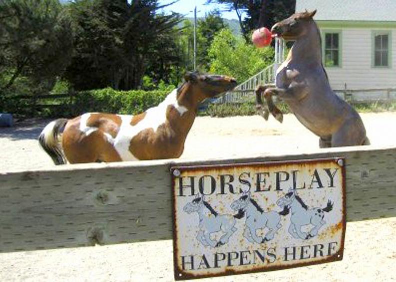 horseplay-5x7 793x566