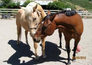 two horses kiss